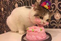születésnapos cica