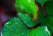 GREEN GLORY / by Cheryl Schoenfelder