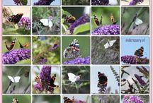 Butterflies, Ladybirds, Bees, Plus More