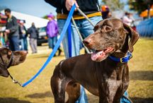 Dogs of SEWE / A collection of the many dogs that you will see at SEWE! From Dock Dogs to Retriever Dogs there is a little something that every dog and their owner will love!