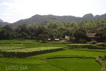 Rando Mai Chau Vietnam