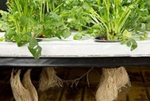 Agriculture and Hydroponics / hydroponic systems