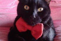 My Cats Gene&Eddie / Cats