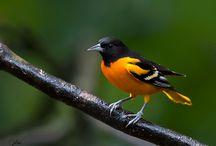 Birds, Butterflies and Bugs!! / by Julie Ward