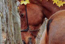 Heste Søde Ideer