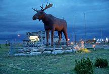 Animal Kingdom / The best/worst/weirdest animal sculptures we can find!