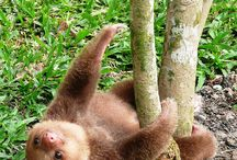 Sloths :D