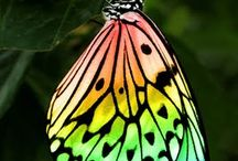 butterflies / by Corley Bailey