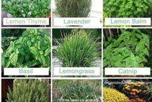 Lindas plantas para Facebook