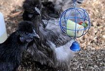 Chicken Farming / by Vanessa