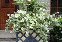 Eco home front garden