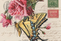Butterfly Collages