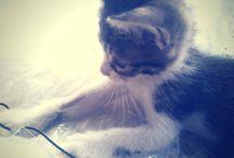 Μy kitten / This little cat had a serious eye problem and was starving in the streets of Athens..This is how it is now!!