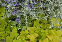 Garden Party / by Donna Alsobrook