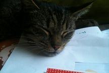 Baloe / My domestic house cat. A SHE cat