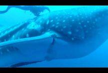 Whales & More Marine Life