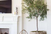 inspiration - indoor trees