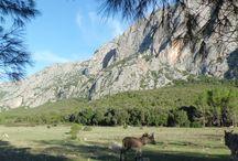 valle Lanaitto