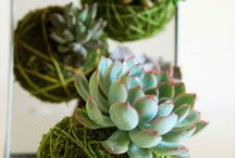 Succulents& Air plants