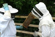Beekeeping at Gloucester Services