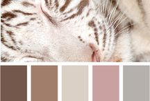 Color Palette / by Christy Davis