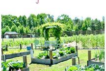 Our Garden / Vegetable gardening tutorials and tours from our blog Cottage at the Crossroads.  / by Cottage at the Crossroads