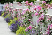 Ideas for my garden