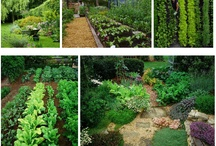 Inspiration: Permaculture garden / by Liliana McBride