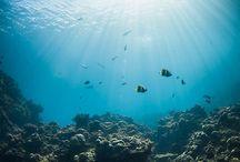 sunrays underwater