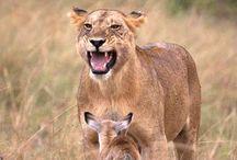 Animals/Nature