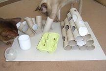 Idées pour chats