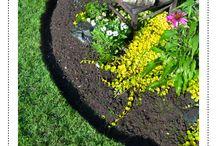 Garedening/Lawn / by Judy Vanhooren