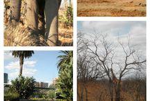 Aventura in Africa de Sud si Zambia