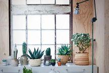 Naturely / Plants, flowers, landscapes / by CC