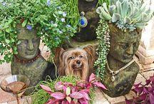 Zahrada /Garden