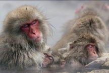 Monkey videos / by Nicole Solis