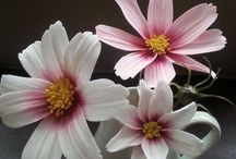 Sugar flowers , gumpaste tut, and clay ect.