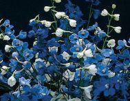 Garden Wish List