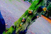 Märchenbaum