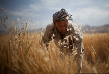 Afghanistan / by Tania Sidiqi