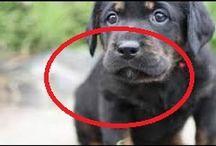 愛犬物語  Lovely dog storys
