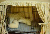 For my dog Drucilla