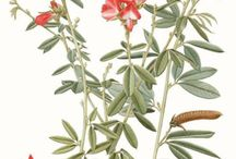 Ilustrações botânicas de Fátima Zagonel