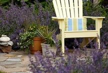 Small Garden / by Jeanne Ludwig