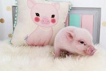 Süße Tierwelt / süß und knudelig