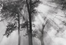 Trees By Ansel Adams