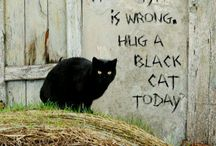 I Love Black Cats