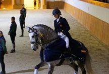 Spanish dancing horses