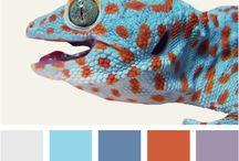 Color PALETTE / by Lauryn Boc