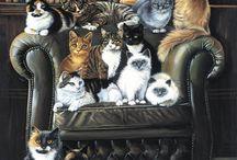 Mačky v obrazoch....